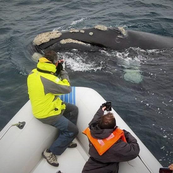tierra-latina-aventure-baleine-franche
