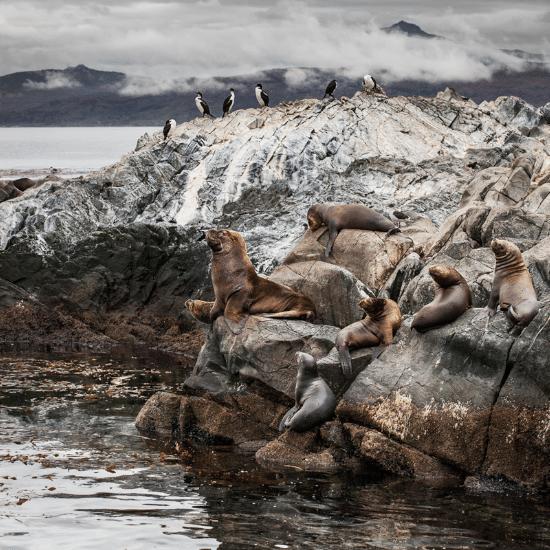 tierra-latina-ushuaia-canal-beagle-photo-madame-oreille.png