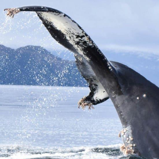 tierra-latina-vignette-isla-carlos-III-whalesound