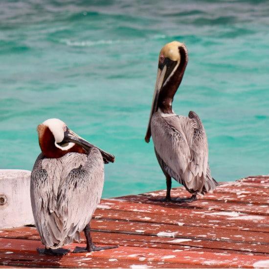tierra-latina-embla-munk-port-oiseau-puerto-morelos-mexique-yucatan