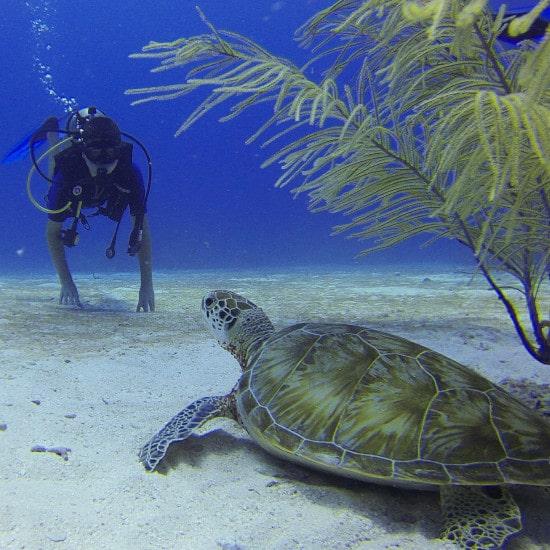 tierra-latina-jack-mack-34-tortue-snorkeling-mexique-yucatan