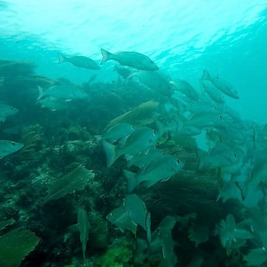 tierra-latina-totonal-snorkeling-plongée-sous-marine-poisson-mexique