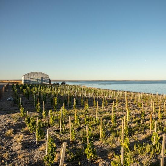 tierra-latina-bahia-bustamante-lodge-vignes-chez-l-habitant-patagonie