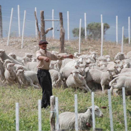 tierra-latina-bahia-bustamante-moutons-gaucho-patagonie
