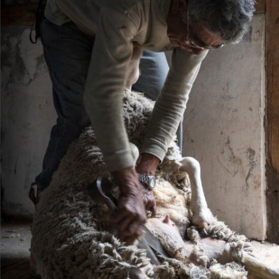 tierra-latina-bahia-bustamante-tonte-mouton-patagonie