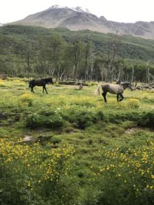 chevaux-glacier-vinciguerra-ushuaia