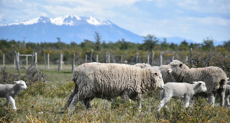 voyager en argentine en famille patagonie